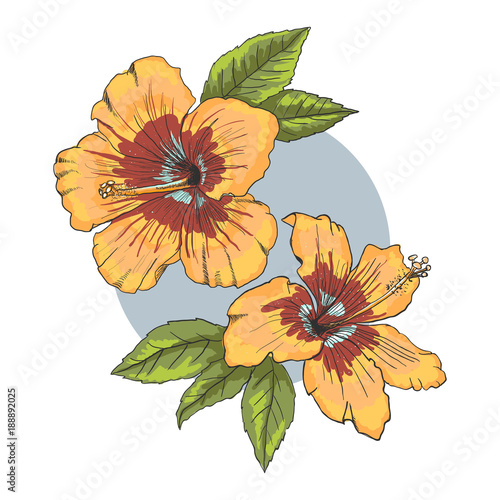 A Bouquet Of Tropical Hibiscus Flowers Hand Drawn Sketch Vector