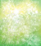 Vector summer,  green,  nature  background,  flowers  on bokeh green background.