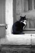 chat noir et blanc sur une fenêtre - 188905624