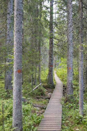 Fotobehang Weg in bos Chemin de bois