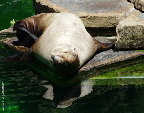 sea lion near the water