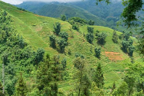 Foto op Canvas Pistache Summer landscape of spectacular rice terraces on hill