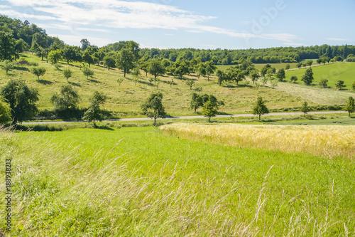 Foto op Canvas Pistache sunny rural landscape