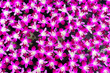 Leinwanddruck Bild - Blurry, pile of orchid is floating on the surface of water for relaxation,mediation,peace concept.