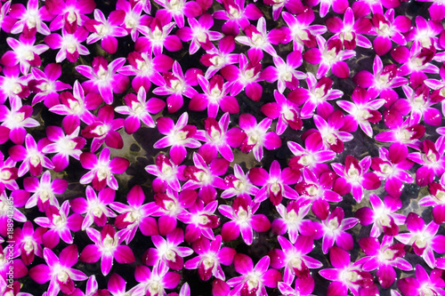 Leinwanddruck Bild Blurry, pile of orchid is floating on the surface of water for relaxation,mediation,peace concept.