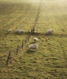 Sheep grazing in landscape during glowing vibrant Winter sunrise - 188947886