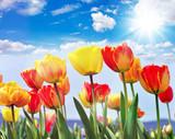 Glück, Lebensfreude, Frühlingserwachen, Auszeit, Leben: Buntes, duftendes Blumenfeld mit Tulpen m Frühling :) - 189033828