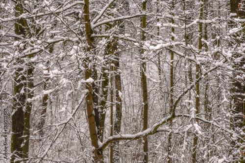 Foto op Canvas Donkergrijs Winterlandschaft mit Schnee, verschneite Bäume