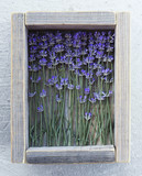 Lavender in a wooden box.
