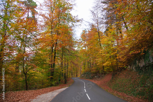 Fotobehang Diepbruine Forêt en automne