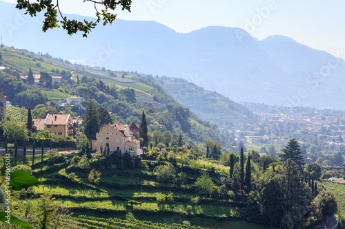 Fotobehang Wijngaard Vineyard and mountain panorama in Merano, South Tyrol