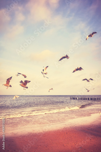 Birds flying above a beach at sunset, color toned picture.