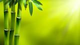 bambus in der sonne abstrakter hintergrund