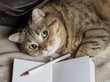 The cat is lying with an open diary. Selective focus.