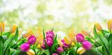 Fototapety Frühling Karte Banner frisch Tulpen