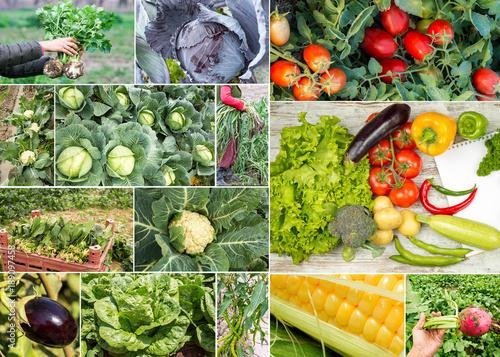 Çeşitli Tarım Ürünü Sebzeler Kolaj