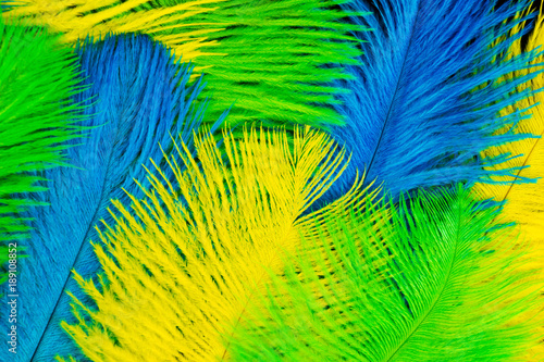 Leinwandbild Motiv The feathers of birds are green, yellow and blue. Black background. Feathers for the Brazilian carnival costume.