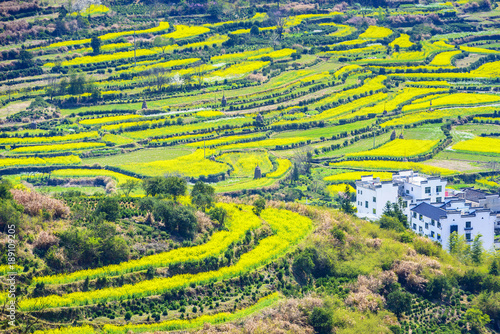 Papiers peints Jaune Terraced fields of Wuyuan County with Yellow oilseed rape field and Blooming canola flowers in spring. It's very quiet. People refer it to as the most beautiful village of China.