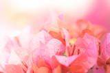 Beautiful blooming flowers macro. - 189126866
