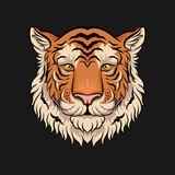 Head of tiger, face of wild animal hand drawn vector Illustration
