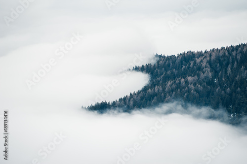 Fog in the forest. Dolomites, Italy - 189134416
