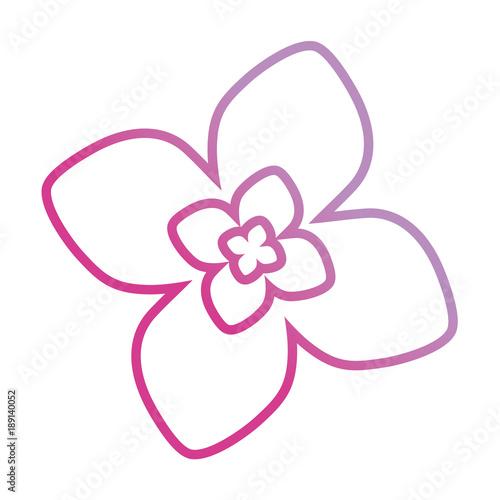purple flower design vector illustration