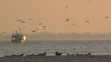 Chaluttier à la pêche en baie de Somme - 189148880