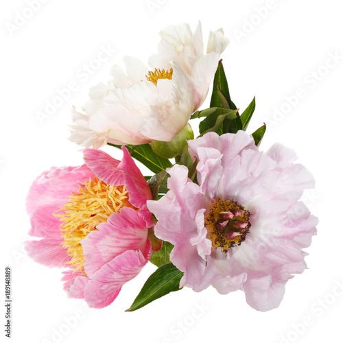 A bouquet of delicate peony in a vase isolated on white background.