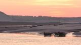 Phoques gris à Berck-sur-mer en Baie d'Authie - 189149855