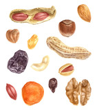 Nuts and dried fruits watercolor set - 189150481