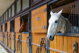 Horses in stable - 189151440