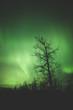 aurora over Elk Island