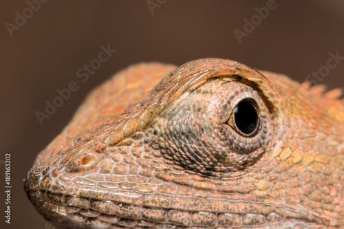 Fotobehang Kameleon Take a closer look at the chameleon