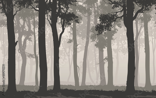 Seamless background horizontal. Silhouette of the deciduous forest, vector illustration
