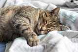 Lazy cat in bed, retro style   - 189175474