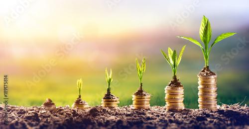 Narastający pieniądze - roślina Na monetach - finanse I inwestyci pojęcie