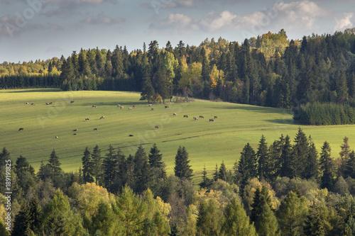 Foto op Canvas Pistache Pieniny Mountains - Poland Carpathians