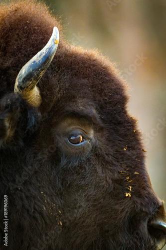 Aluminium Bison Buffalo Profile