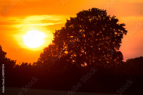 Foto op Canvas Baobab Old oak and beautiful sunset