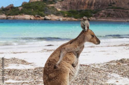 Fotobehang Kangoeroe Känguru am Strand