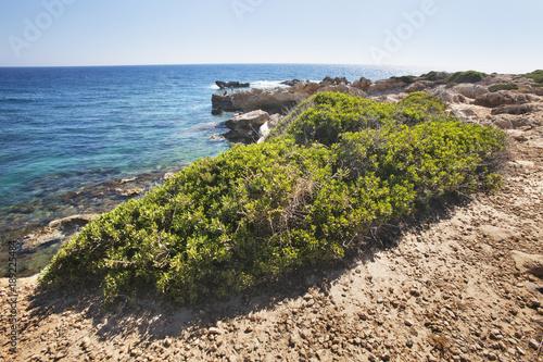 Fotobehang Cyprus Cyprus, Paphos. Coastline of mediterranean sea