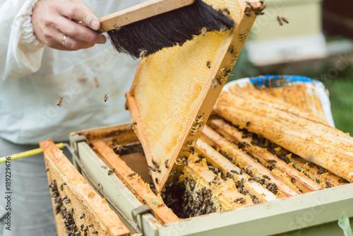 Aluminium Bee Imker bürstet Bienen von einer Honigwabe