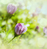 macro de unas flores en el campo