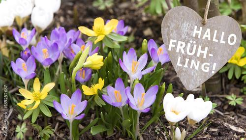 Frühling, Krokusse, Herz