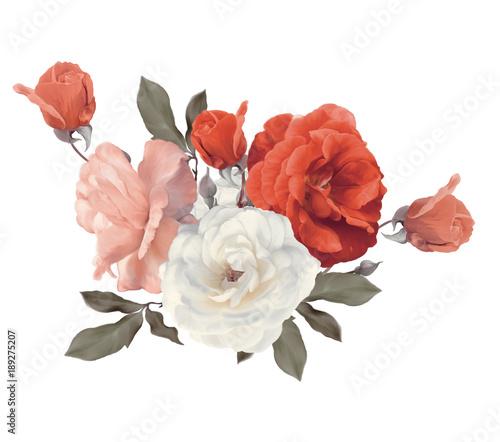 Fototapeta Roses watercolor on white background