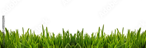 Fresh green grass as border on the lower side of the horizontal frame in a seamless empty white background