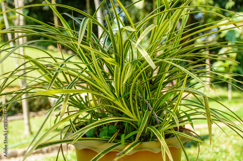 Foto op Plexiglas Landschappen photo of beautiful croton plant