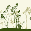 Silhouettes of wildflowers and birds