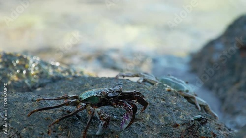 Crabs on the rock at the beach