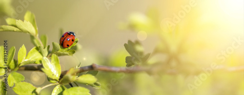 Springtime concept - web banner of a ladybug as sitting on a leaf